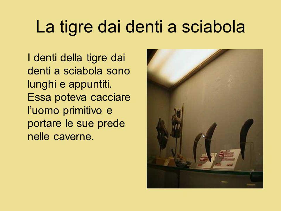 La tigre dai denti a sciabola I denti della tigre dai denti a sciabola sono lunghi e appuntiti. Essa poteva cacciare luomo primitivo e portare le sue