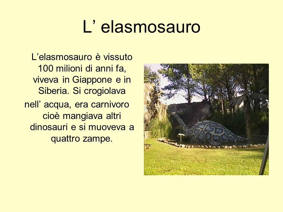 L elasmosauro Lelasmosauro è vissuto 100 milioni di anni fa, viveva in Giappone e in Siberia. Si crogiolava nell acqua, era carnivoro cioè mangiava al