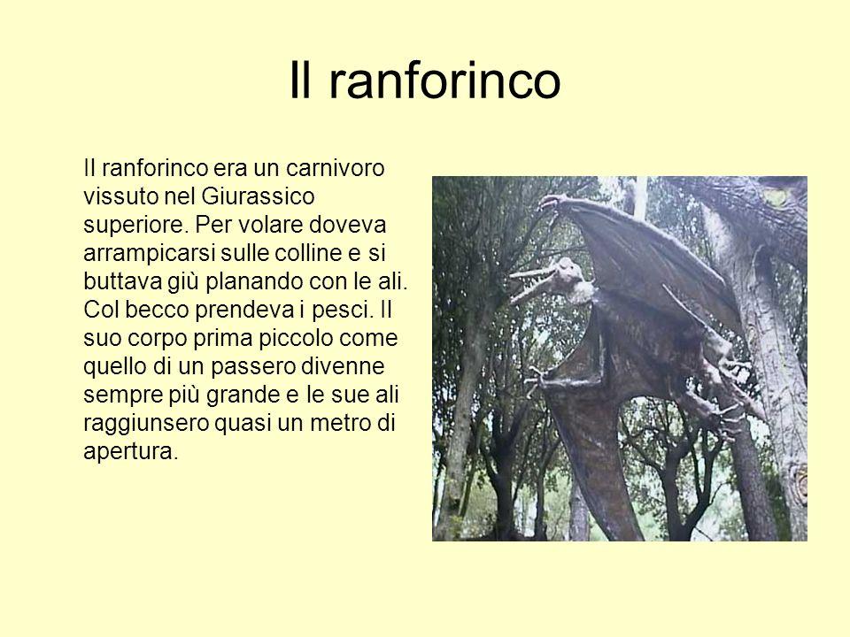 Il ranforinco Il ranforinco era un carnivoro vissuto nel Giurassico superiore. Per volare doveva arrampicarsi sulle colline e si buttava giù planando