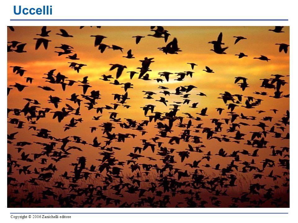 Copyright © 2006 Zanichelli editore Uccelli