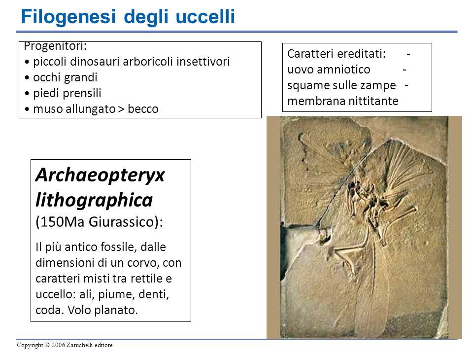 Copyright © 2006 Zanichelli editore Progenitori: piccoli dinosauri arboricoli insettivori occhi grandi piedi prensili muso allungato > becco Archaeopt