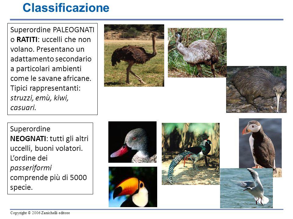Copyright © 2006 Zanichelli editore Superordine PALEOGNATI o RATITI: uccelli che non volano. Presentano un adattamento secondario a particolari ambien