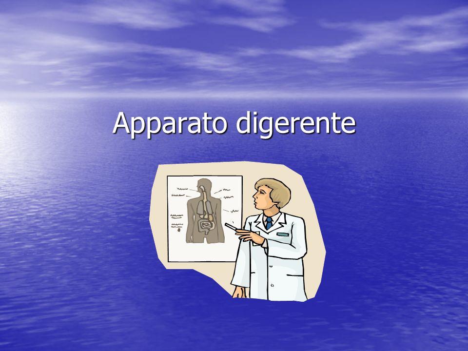 Stomaco Le pareti dello stomaco sono formate da una potente muscolatura.