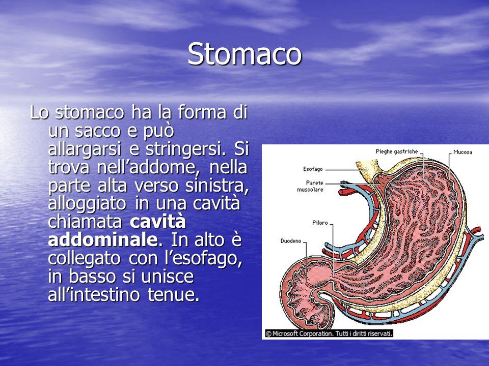 Stomaco Lo stomaco ha la forma di un sacco e può allargarsi e stringersi. Si trova nelladdome, nella parte alta verso sinistra, alloggiato in una cavi