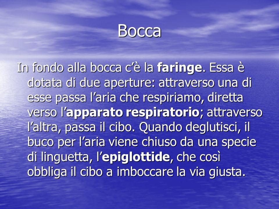 Esofago Lesofago è un lungo tubo che percorre il torace e collega la faringe con lo stomaco.