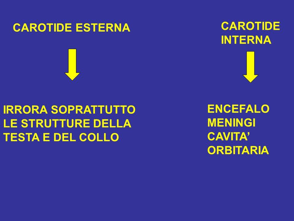CAROTIDE ESTERNA IRRORA SOPRATTUTTO LE STRUTTURE DELLA TESTA E DEL COLLO CAROTIDE INTERNA ENCEFALO MENINGI CAVITA ORBITARIA