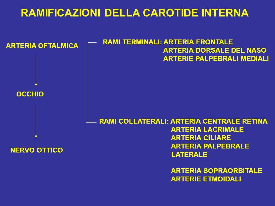 RAMIFICAZIONI DELLA CAROTIDE INTERNA ARTERIA OFTALMICA RAMI TERMINALI: ARTERIA FRONTALE ARTERIA DORSALE DEL NASO ARTERIE PALPEBRALI MEDIALI RAMI COLLA