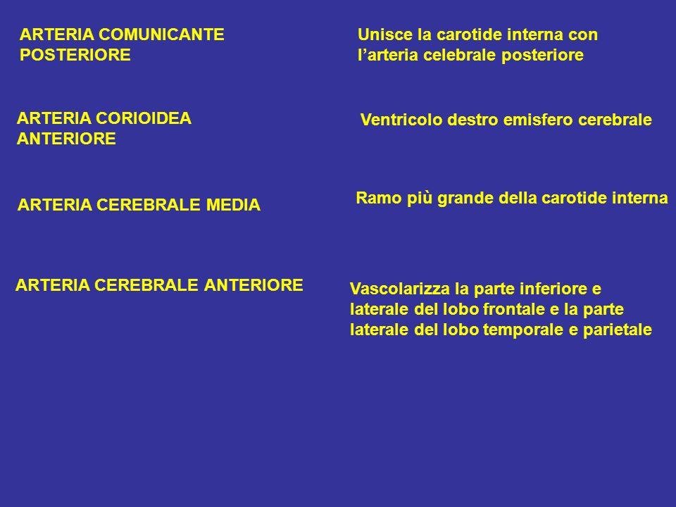 ARTERIA COMUNICANTEUnisce la carotide interna con POSTERIORElarteria celebrale posteriore ARTERIA CORIOIDEA ANTERIORE Ventricolo destro emisfero cereb