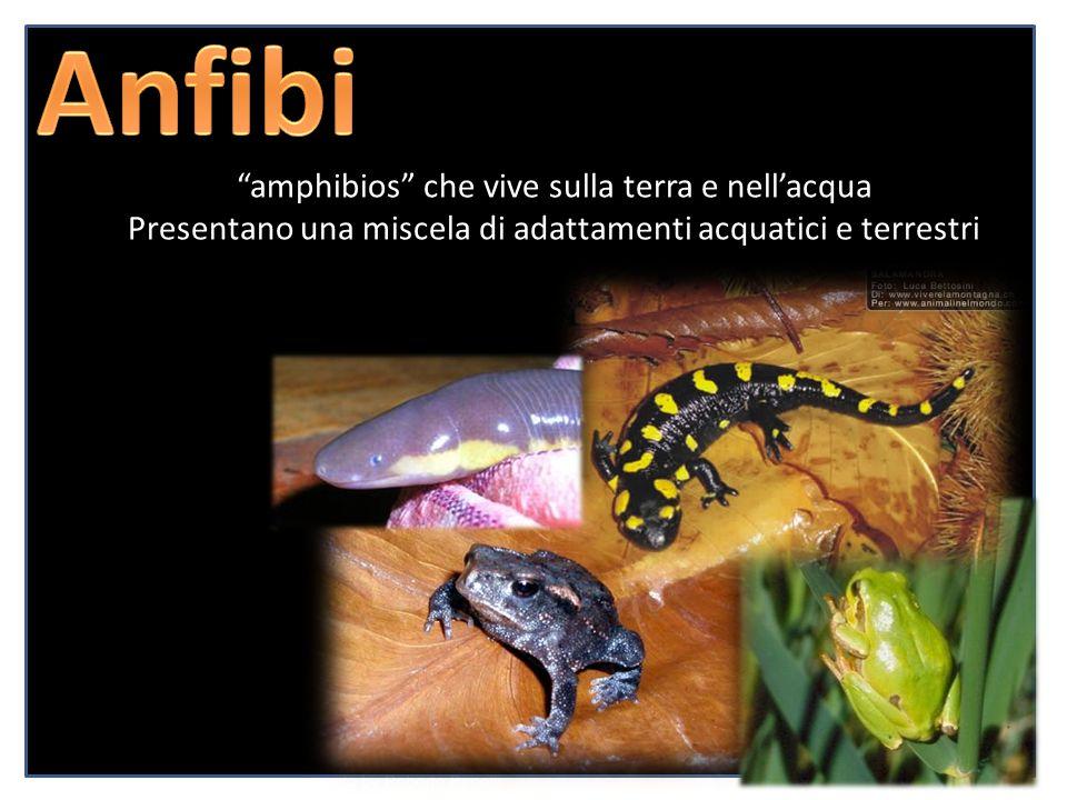 amphibios che vive sulla terra e nellacqua Presentano una miscela di adattamenti acquatici e terrestri