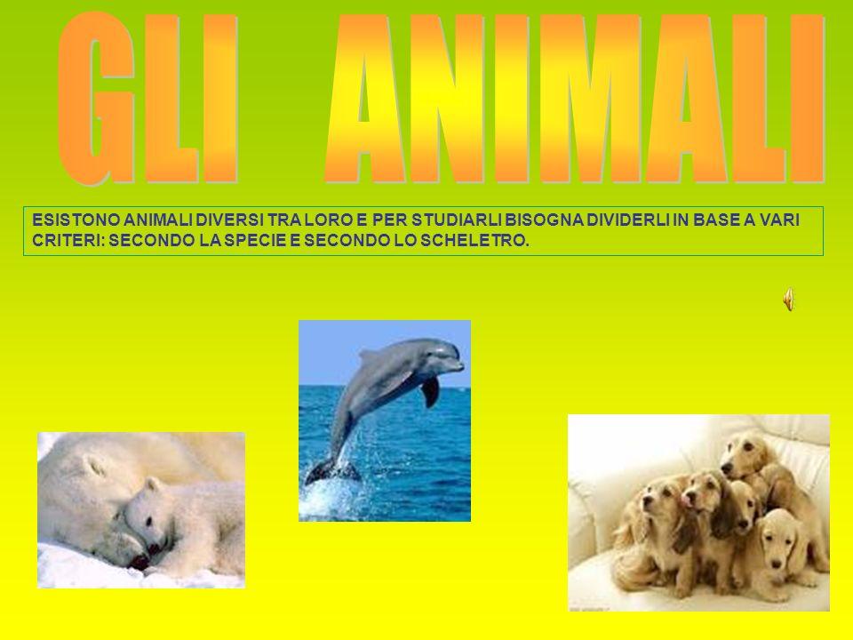 ESISTONO ANIMALI DIVERSI TRA LORO E PER STUDIARLI BISOGNA DIVIDERLI IN BASE A VARI CRITERI: SECONDO LA SPECIE E SECONDO LO SCHELETRO.
