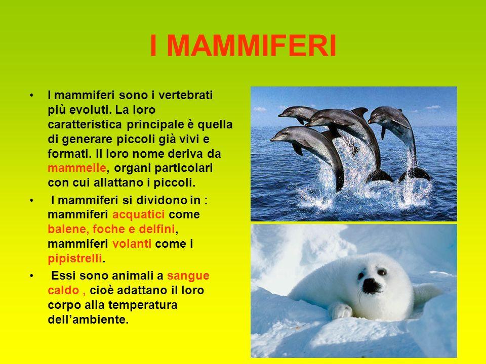 I MAMMIFERI I mammiferi sono i vertebrati più evoluti. La loro caratteristica principale è quella di generare piccoli già vivi e formati. Il loro nome