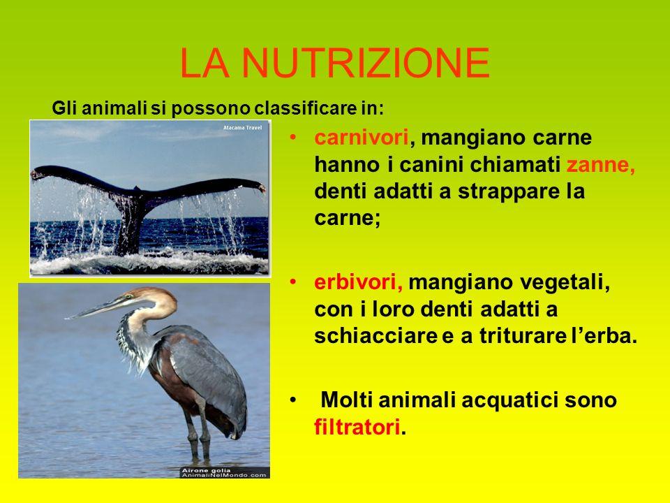 LA NUTRIZIONE carnivori, mangiano carne hanno i canini chiamati zanne, denti adatti a strappare la carne; erbivori, mangiano vegetali, con i loro dent