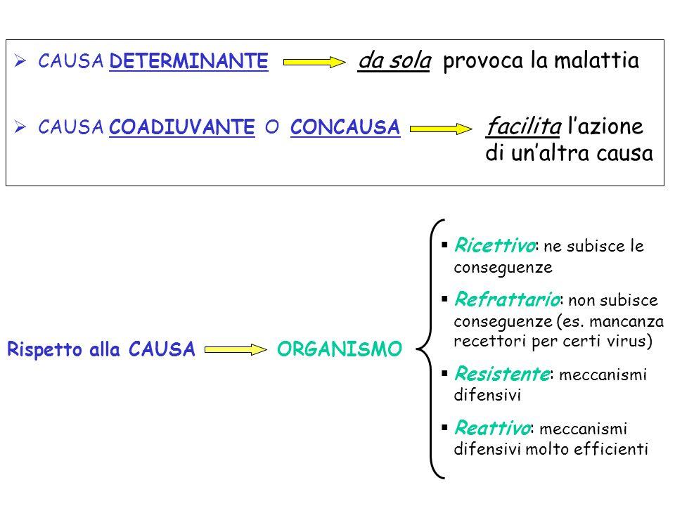 FENOMENO MORBOSO FENOMENO MORBOSO Manifestazione patologica lieve ( es.