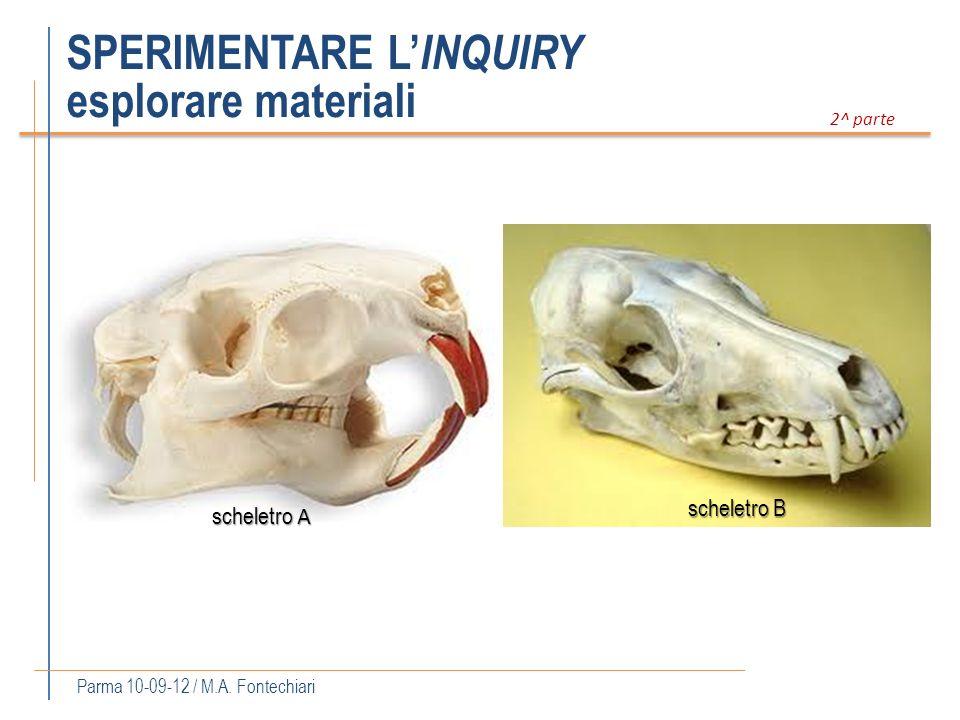 SPERIMENTARE L INQUIRY Parma 10-09-12 / M.A. Fontechiari 2^ parte scheletro A scheletro B esplorare materiali