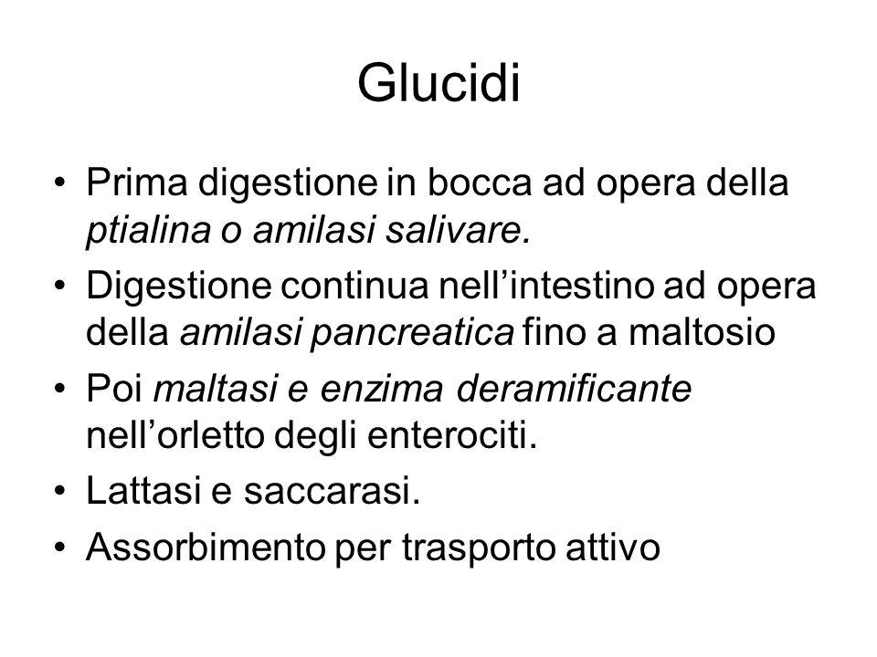 Glucidi Prima digestione in bocca ad opera della ptialina o amilasi salivare. Digestione continua nellintestino ad opera della amilasi pancreatica fin