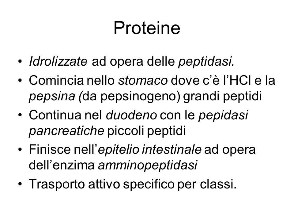 Proteine Idrolizzate ad opera delle peptidasi. Comincia nello stomaco dove cè lHCl e la pepsina (da pepsinogeno) grandi peptidi Continua nel duodeno c