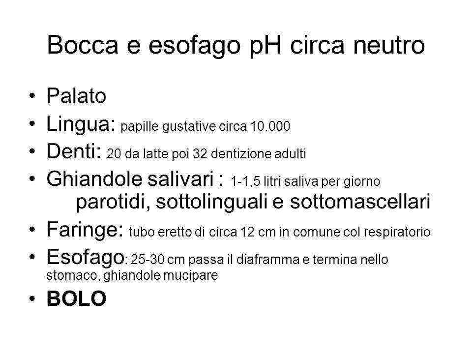 Bocca e esofago pH circa neutro Palato Lingua: papille gustative circa 10.000 Denti: 20 da latte poi 32 dentizione adulti Ghiandole salivari : 1-1,5 l