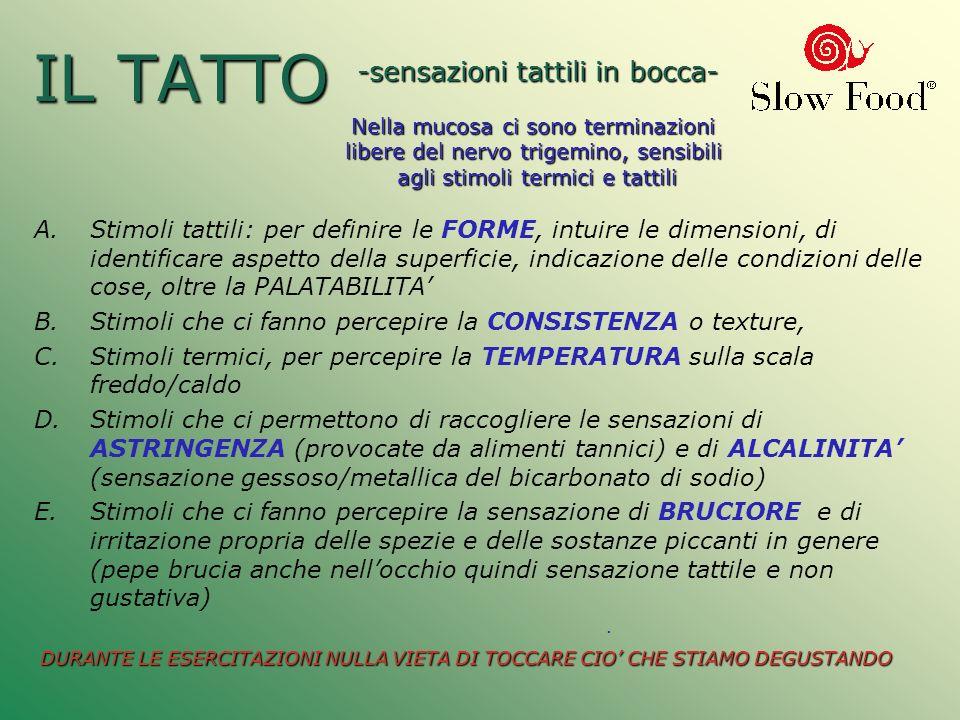 IL TATTO A.Stimoli tattili: per definire le FORME, intuire le dimensioni, di identificare aspetto della superficie, indicazione delle condizioni delle
