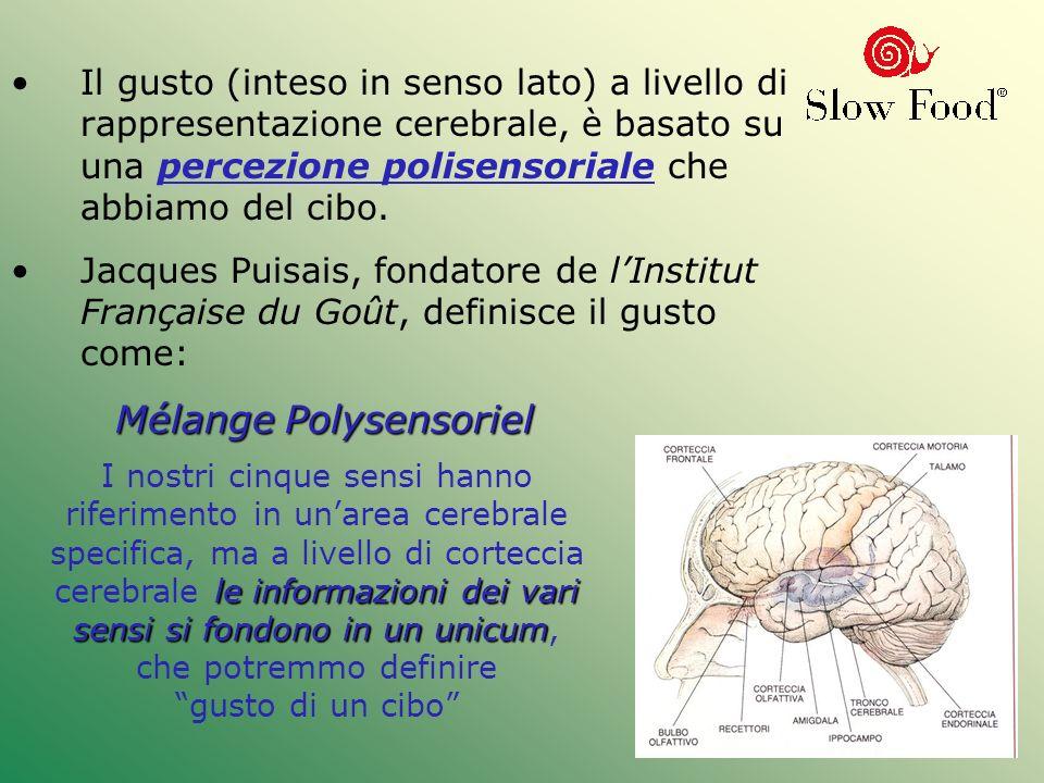 Il gusto (inteso in senso lato) a livello di rappresentazione cerebrale, è basato su una percezione polisensoriale che abbiamo del cibo. Jacques Puisa