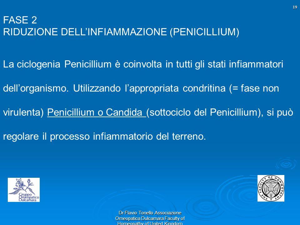 19 Dr Flavio Tonello Associazione Omeopatica Dulcamara Faculty of Homeopathy of United Kingdom FASE 2 RIDUZIONE DELLINFIAMMAZIONE (PENICILLIUM) La cic