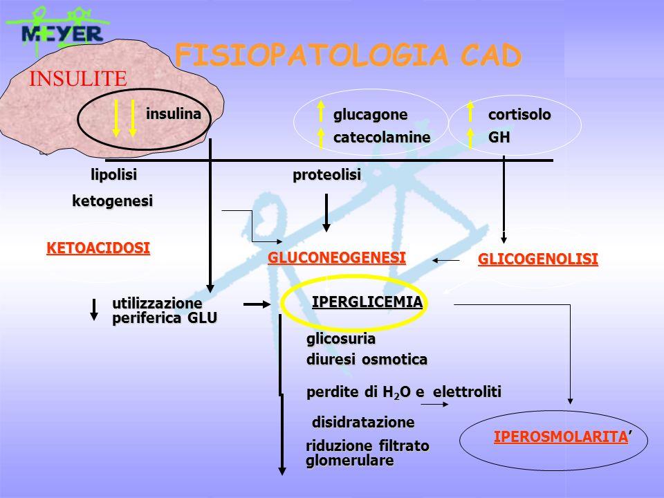 FISIOPATOLOGIA CAD glucagone cortisolo catecolamine GH insulina insulina lipolisi lipolisi proteolisi proteolisi GLICOGENOLISI GLICOGENOLISI ketogenes