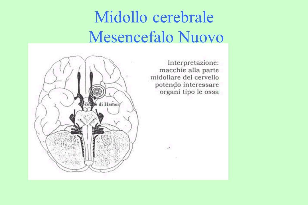 Tronco cerebrale Endoderma