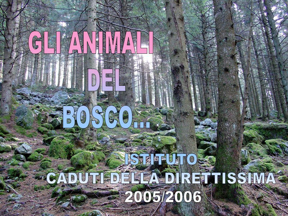 INDICE TRACCE DEGLI ANIMALITRACCE DEGLI ANIMALI CERVO LUPO VOLPE CINGHIALE CAPRIOLO DAINO