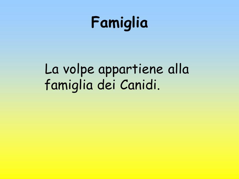 Famiglia La volpe appartiene alla famiglia dei Canidi.