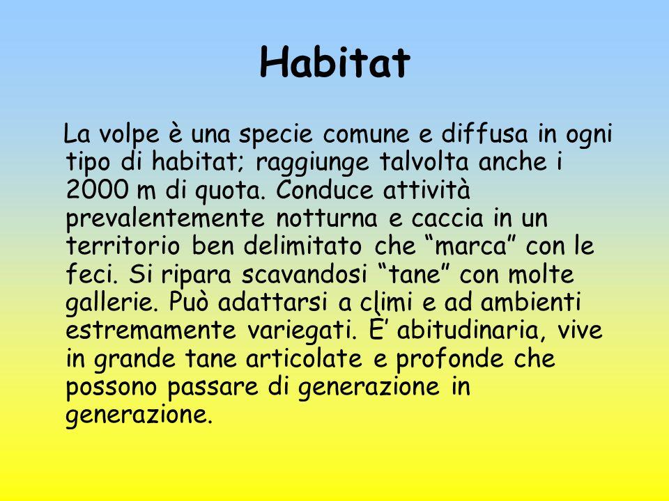 Habitat La volpe è una specie comune e diffusa in ogni tipo di habitat; raggiunge talvolta anche i 2000 m di quota. Conduce attività prevalentemente n