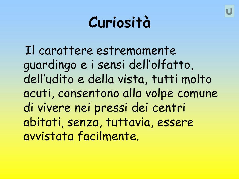 Curiosità Il carattere estremamente guardingo e i sensi dellolfatto, delludito e della vista, tutti molto acuti, consentono alla volpe comune di viver