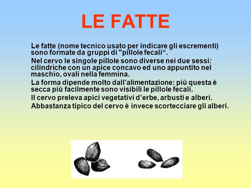 LE FATTE Le fatte (nome tecnico usato per indicare gli escrementi) sono formate da gruppi di