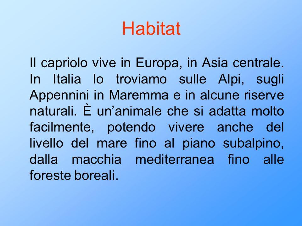 Habitat Il capriolo vive in Europa, in Asia centrale. In Italia lo troviamo sulle Alpi, sugli Appennini in Maremma e in alcune riserve naturali. È una