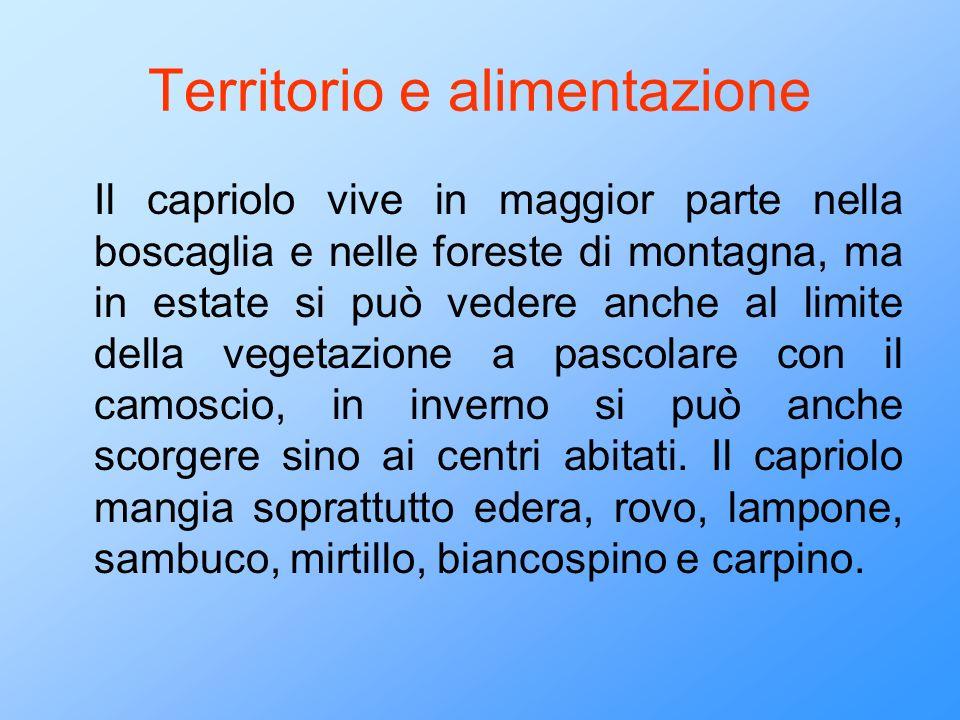 Territorio e alimentazione Il capriolo vive in maggior parte nella boscaglia e nelle foreste di montagna, ma in estate si può vedere anche al limite d