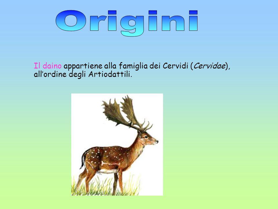 Il daino appartiene alla famiglia dei Cervidi (Cervidae), allordine degli Artiodattili.
