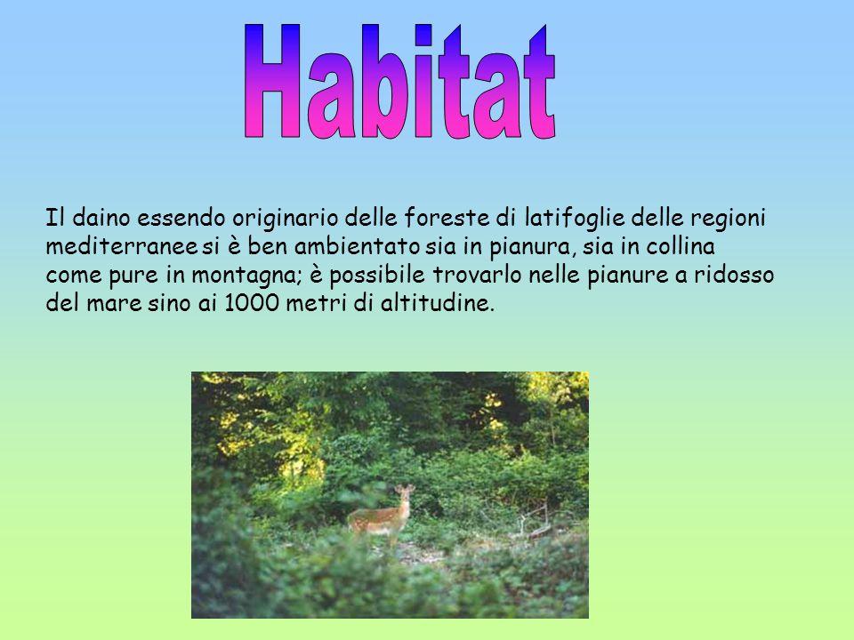 Il daino essendo originario delle foreste di latifoglie delle regioni mediterranee si è ben ambientato sia in pianura, sia in collina come pure in mon