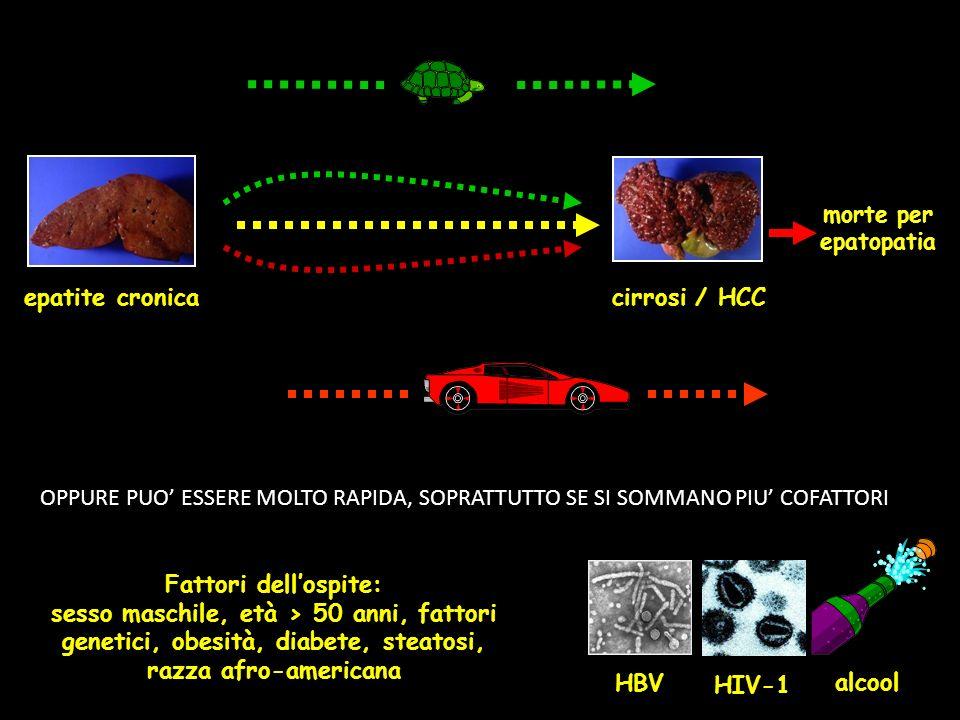 epatite cronica morte per epatopatia HIV-1 Fattori dellospite: sesso maschile, età > 50 anni, fattori genetici, obesità, diabete, steatosi, razza afro