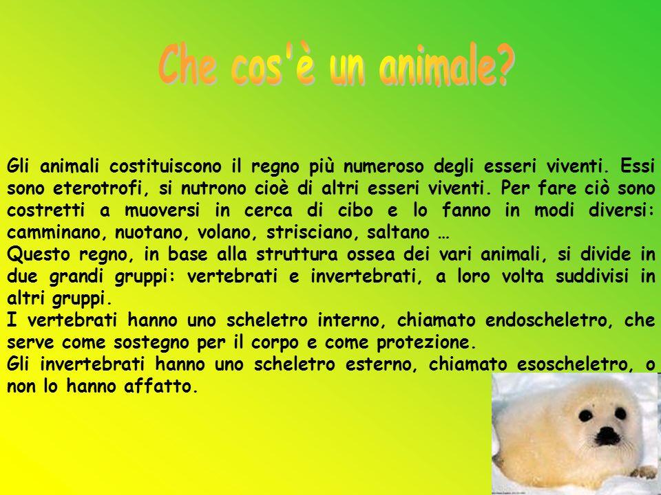 Gli animali costituiscono il regno più numeroso degli esseri viventi. Essi sono eterotrofi, si nutrono cioè di altri esseri viventi. Per fare ciò sono