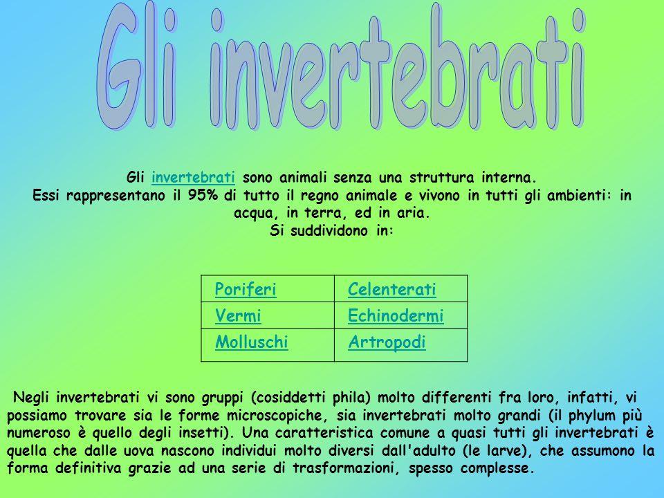 Gli invertebrati sono animali senza una struttura interna.invertebrati Essi rappresentano il 95% di tutto il regno animale e vivono in tutti gli ambie