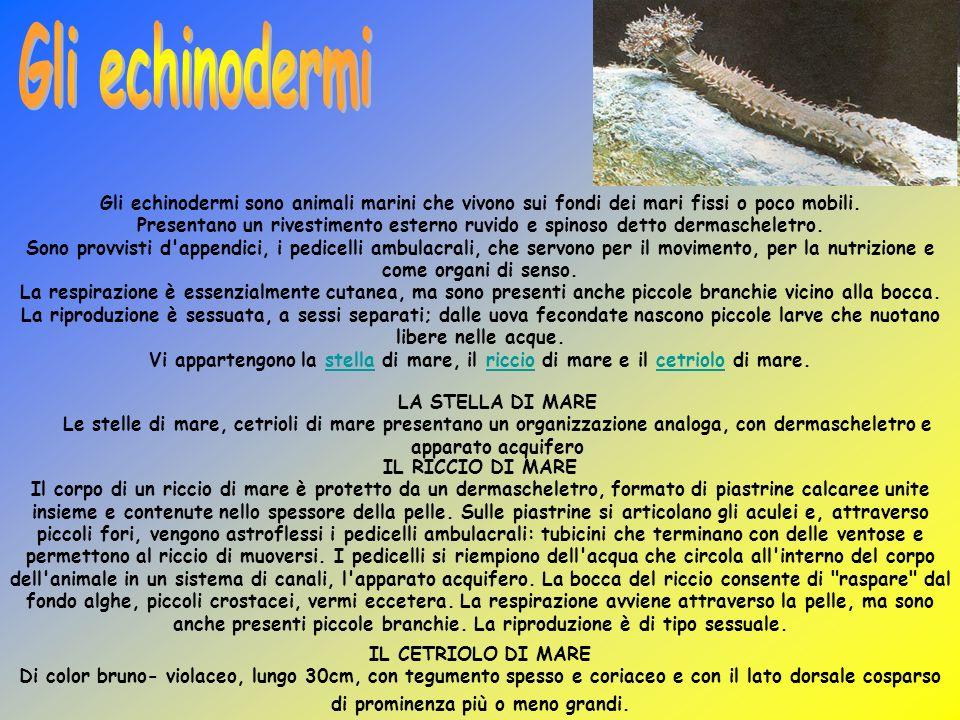 Gli echinodermi sono animali marini che vivono sui fondi dei mari fissi o poco mobili. Presentano un rivestimento esterno ruvido e spinoso detto derma
