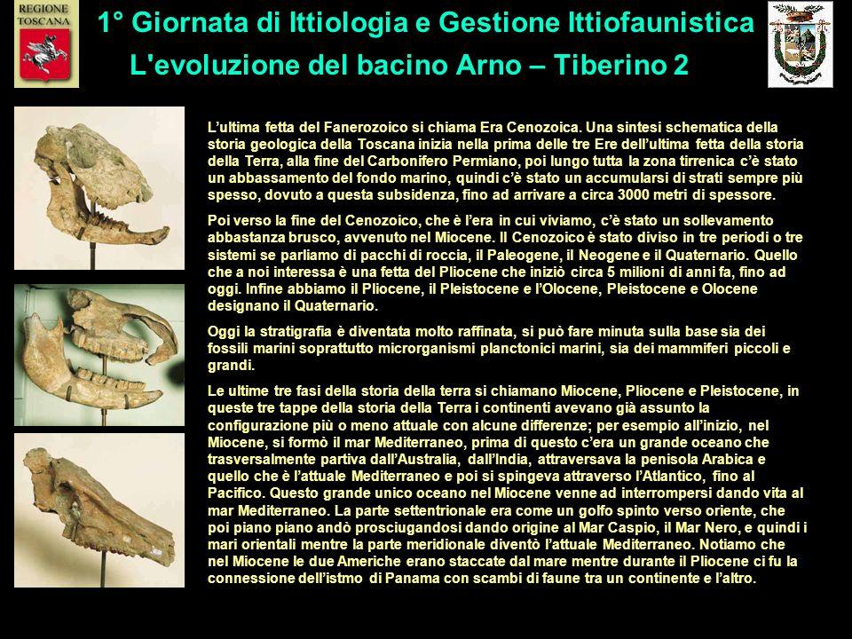 L'evoluzione del bacino Arno – Tiberino 2 1° Giornata di Ittiologia e Gestione Ittiofaunistica Lultima fetta del Fanerozoico si chiama Era Cenozoica.