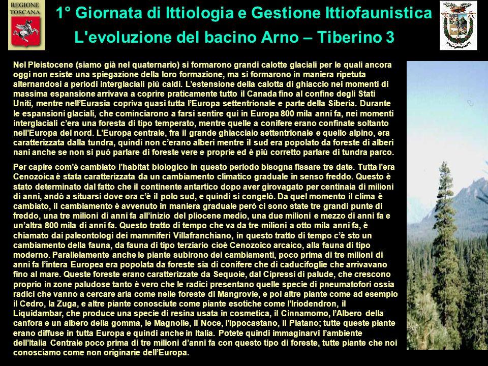 L'evoluzione del bacino Arno – Tiberino 3 1° Giornata di Ittiologia e Gestione Ittiofaunistica Nel Pleistocene (siamo già nel quaternario) si formaron