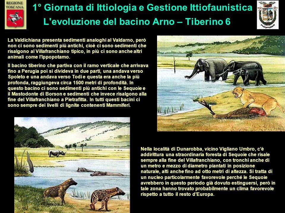 L'evoluzione del bacino Arno – Tiberino 6 1° Giornata di Ittiologia e Gestione Ittiofaunistica La Valdichiana presenta sedimenti analoghi al Valdarno,