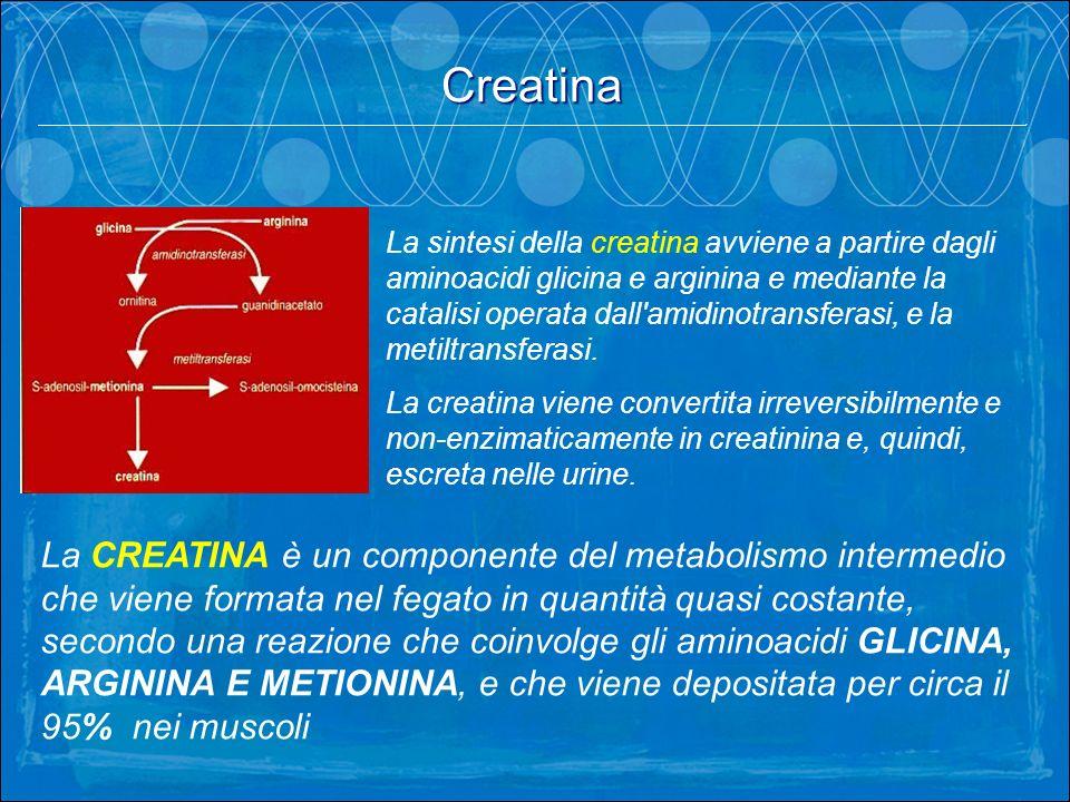 Creatina. La sintesi della creatina avviene a partire dagli aminoacidi glicina e arginina e mediante la catalisi operata dall'amidinotransferasi, e la
