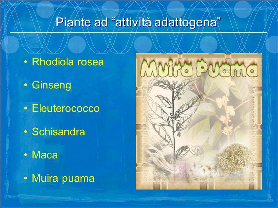 Rhodiola rosea Ginseng Eleuterococco Schisandra Maca Muira puama Piante ad attività adattogena.