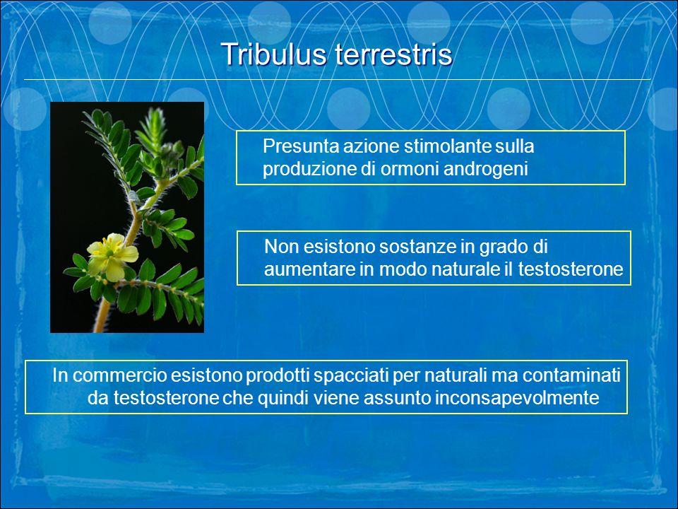 Tribulus terrestris. Presunta azione stimolante sulla produzione di ormoni androgeni Non esistono sostanze in grado di aumentare in modo naturale il t