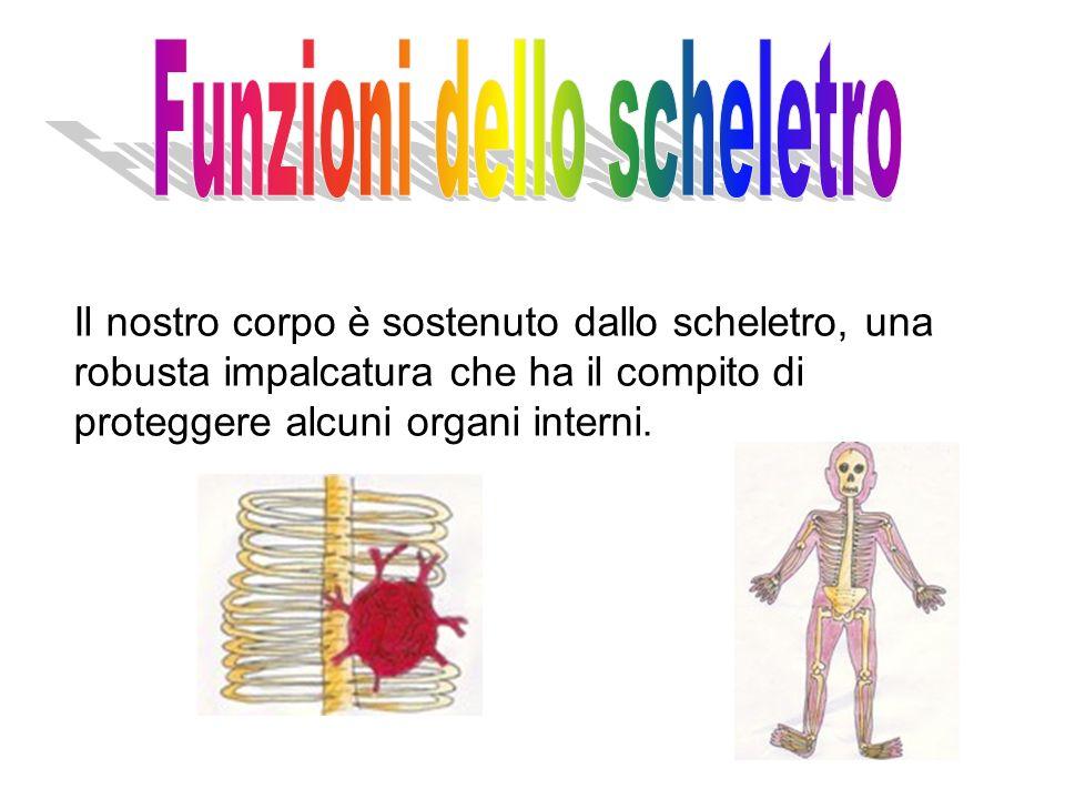 Il nostro corpo è sostenuto dallo scheletro, una robusta impalcatura che ha il compito di proteggere alcuni organi interni.