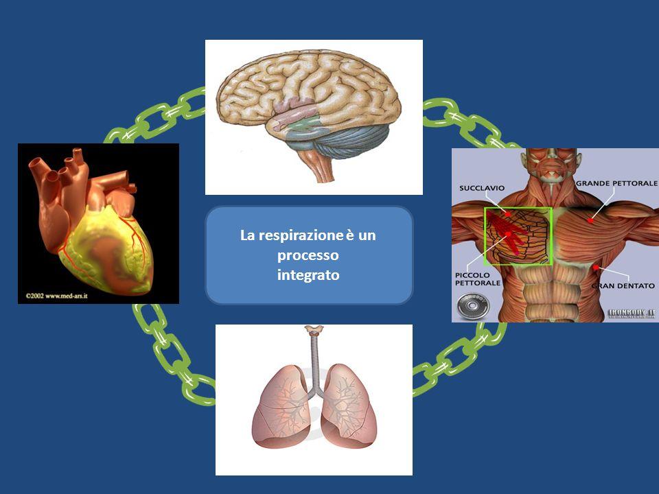 La respirazione è un processo integrato