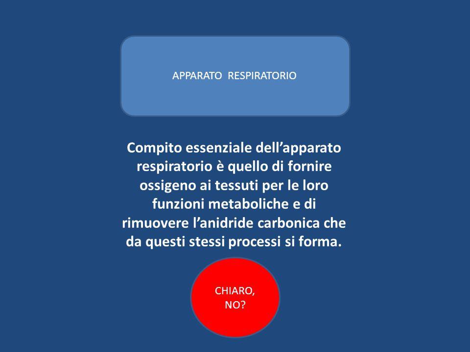 Compito essenziale dellapparato respiratorio è quello di fornire ossigeno ai tessuti per le loro funzioni metaboliche e di rimuovere lanidride carboni