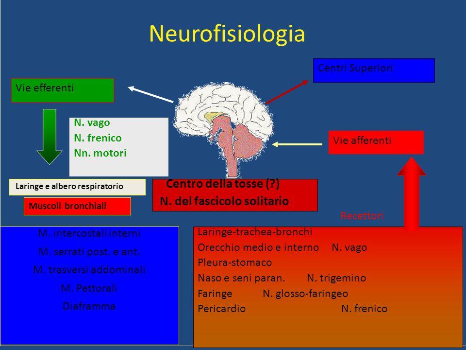 Neurofisiologia Vie efferenti N. vago N. frenico Nn. motori Laringe-trachea-bronchi Orecchio medio e interno N. vago Pleura-stomaco Naso e seni paran.