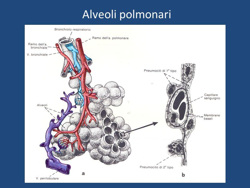 Diagnosi corretta Esame spirometrico Valutazione dei volumi polmonari Valutazione della forza dei muscoli inspiratori ed espiratori (Pimax e Pemax) Emogasanalisi Test del cammino Polisonnografia